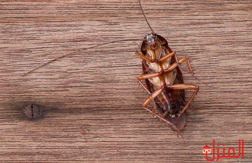 كيفيه التخلص من الحشرات فى منزلك