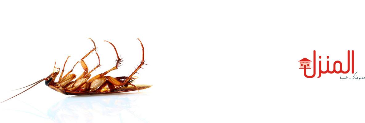 كيف تقضي على الصراصير فى المنزل