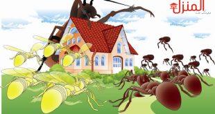 اسباب ظهور الحشرات في المنزل