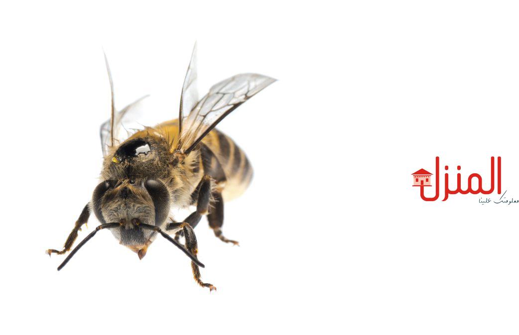 الفوائد العلاجيه لسم النحل