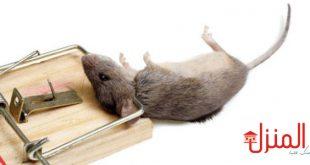 القضاء علي الفئران