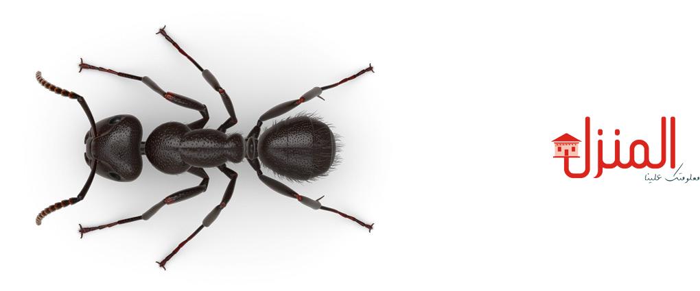كيف تحمى حديقتك من النمل