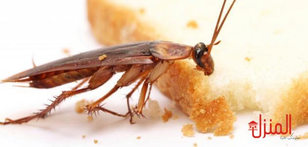 الحشرات الضاره والنافعه