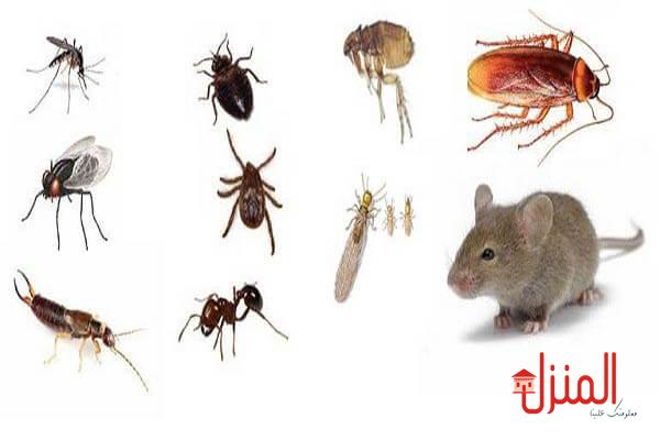 القضاء علي الحشرات المنزليه