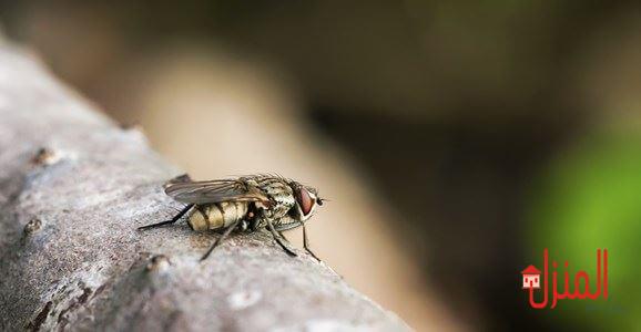 مكافحة الذباب