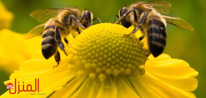 النحل وفوائده