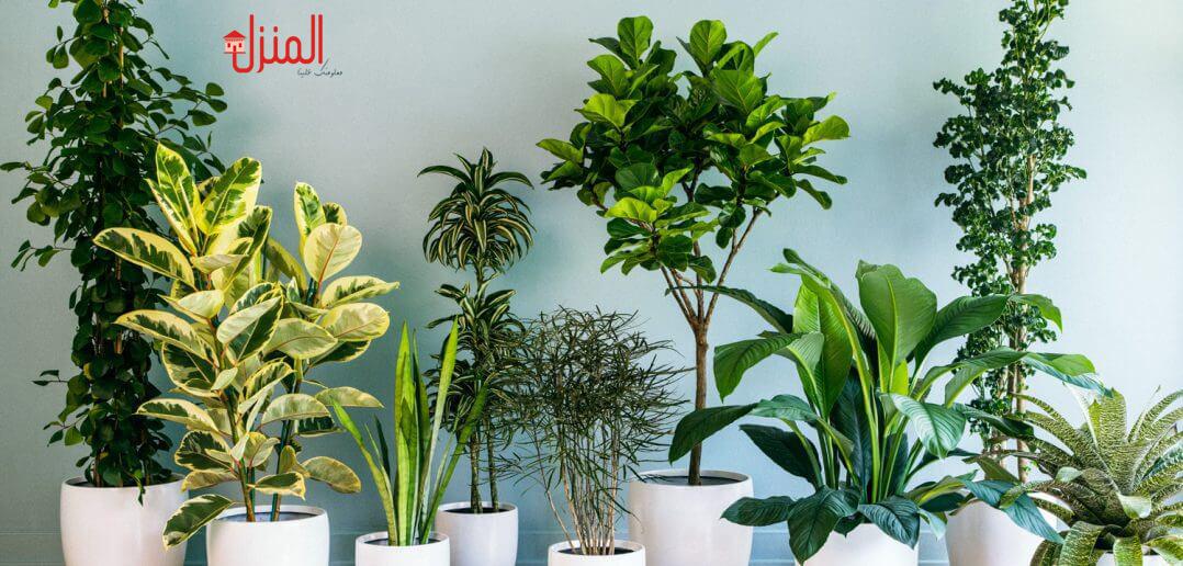 كيفية الاهتمام بنباتات الزينه
