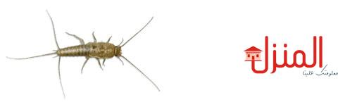الوقايه من الحشرات المنزليه
