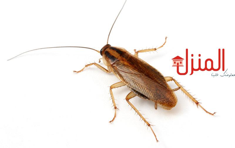 قتل الحشرات الصيفيه طبيعياً