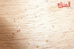 حشرة السوس الخشب