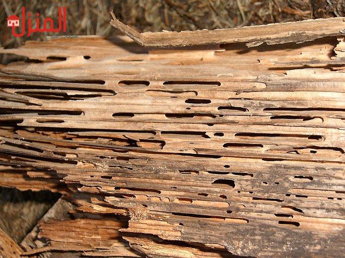 كيفية علاج سوس الخشب