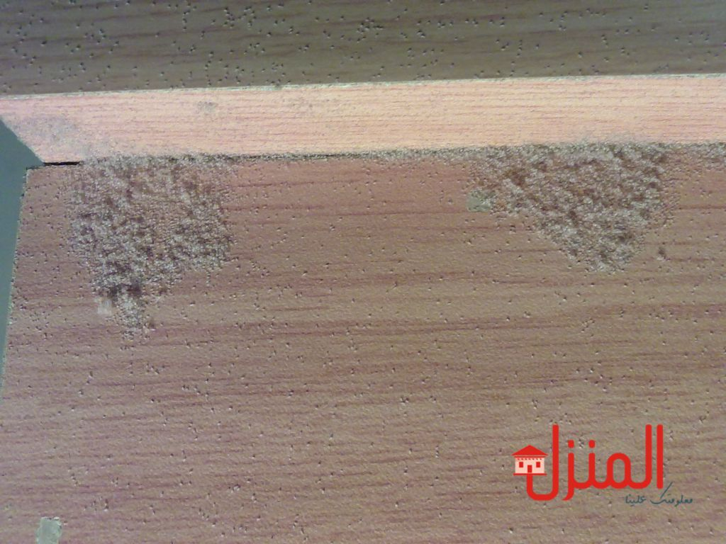 ماهو سوس الخشب