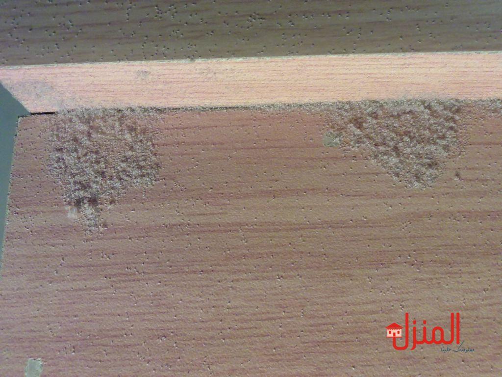 سوس الخشب وعلاجه