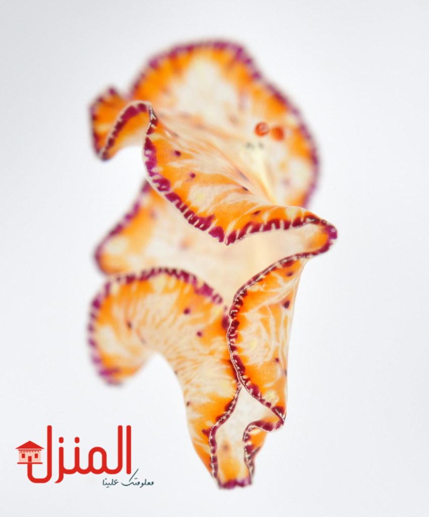 انواع الديدان المفلطحة